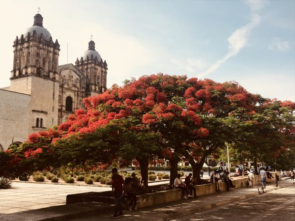 Having spent much of 2018 living in Oaxaca and working on Erstwhile's flagship line there, this is one of my favorite memories from the past year: flame trees in full bloom by the Templo de Santo Domingo de Guzman in Oaxaca City. Photo taken in May 2018.